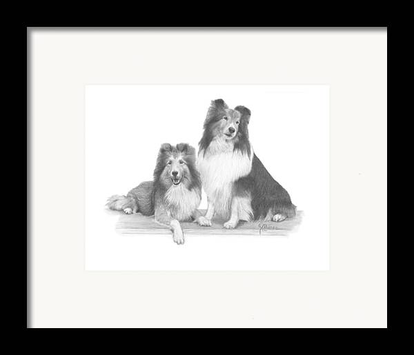Pencil Drawing Print Framed Print featuring the drawing Shelties by Joe Olivares