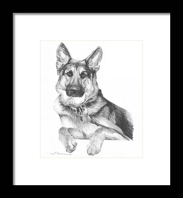 <a Href=http://miketheuer.com Target =_blank>www.miketheuer.com</a> Shepherd Dog Pencil Portrait Framed Print featuring the drawing Shepherd Dog Pencil Portrait by Mike Theuer