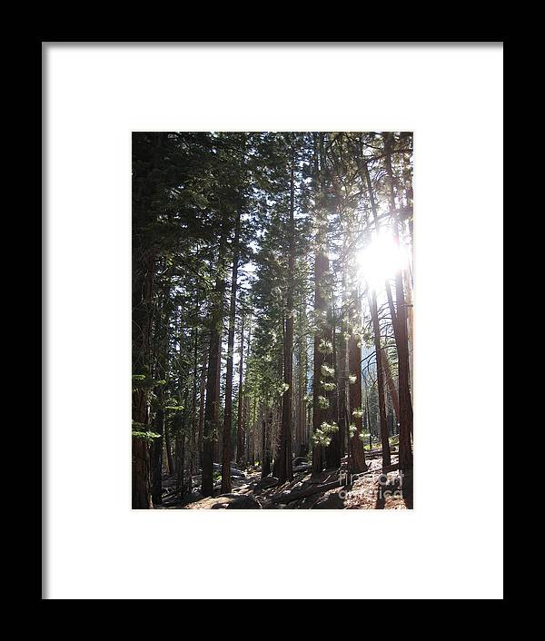 Yosemite Framed Print featuring the photograph Shimmering Pines by AC Hamilton