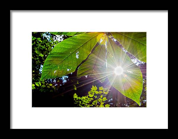 Leaves. Light. Landscape. Sun. Framed Print featuring the photograph Shining Through by Todd Gontarek