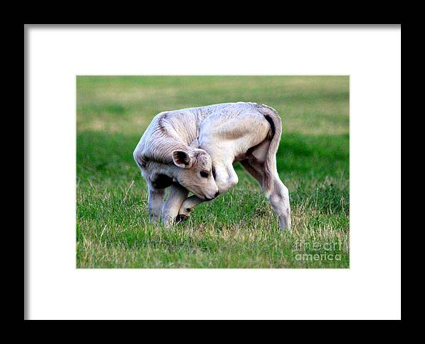 Shoo Fly Framed Print featuring the photograph Shoo Fly--you Pesky Bug by Kathy White