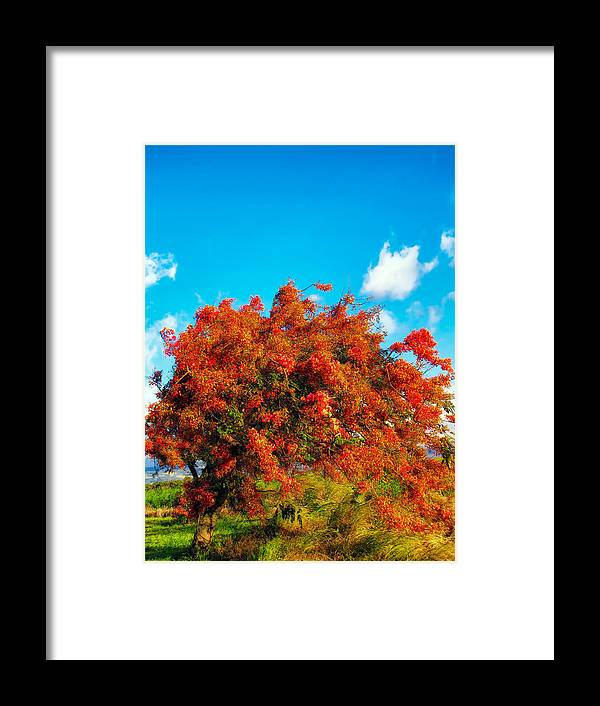 Hawaii Framed Print featuring the photograph Shower Tree 18 by Dawn Eshelman