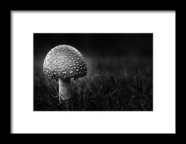 Mushroom Framed Print featuring the photograph Shroom by Shane Holsclaw