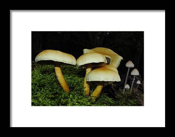 Mushroom Framed Print featuring the photograph Shrooms by Derek Noland