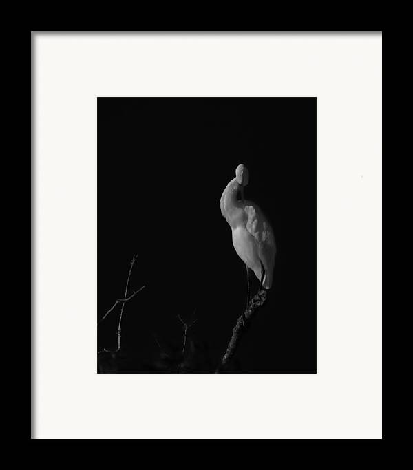 Black And White Framed Print featuring the photograph shy by Mario Celzner