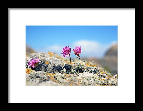Flower Framed Print featuring the photograph Side By Side - Old And New by Lynne Sutherland