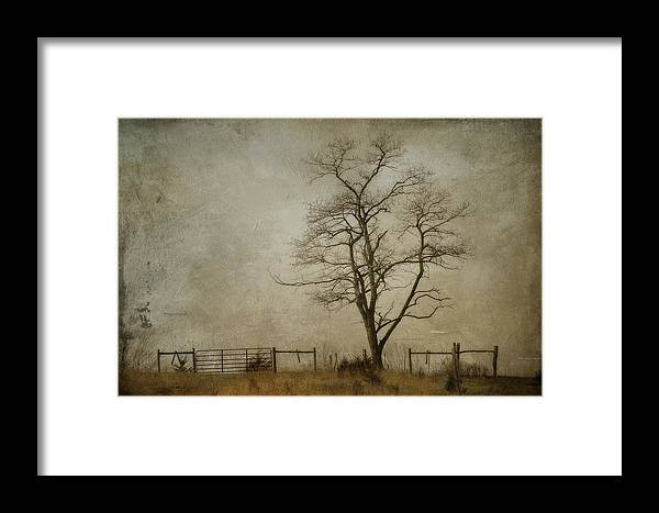 Tree Framed Print featuring the photograph Silent Solitude by Kathy Jennings