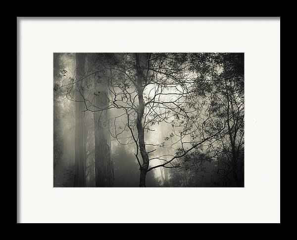 Fog Framed Print featuring the photograph Silent Stirring by Amy Weiss