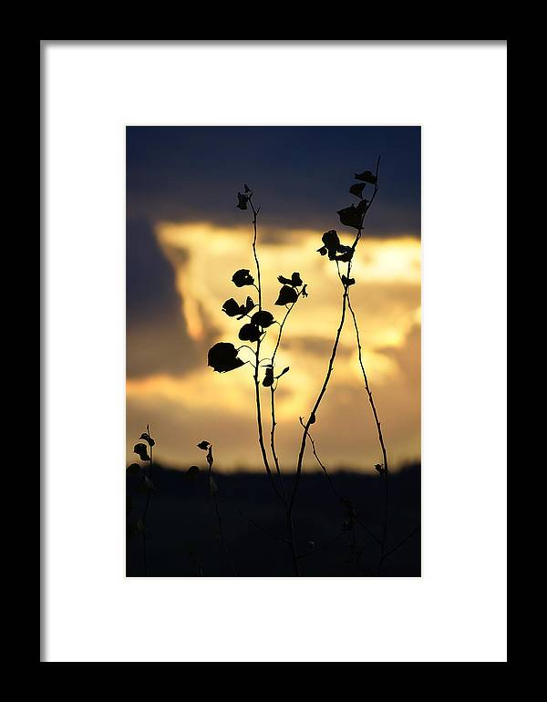 Cloud Framed Print featuring the photograph Silhouette At Sunset by Sylvie Corriveau