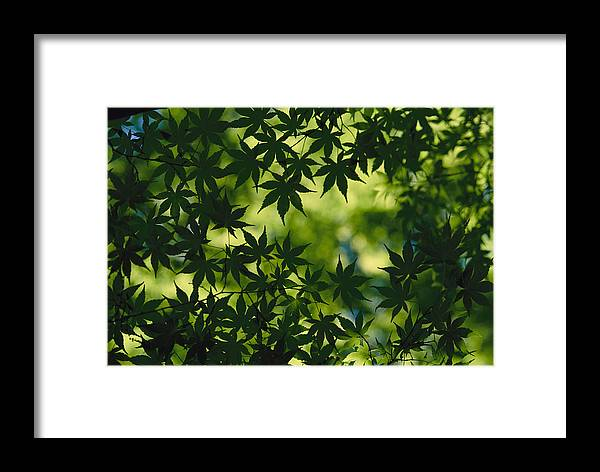 Color Image Framed Print featuring the photograph Silhouette Of Japanese Maple Leaves by Todd Gipstein
