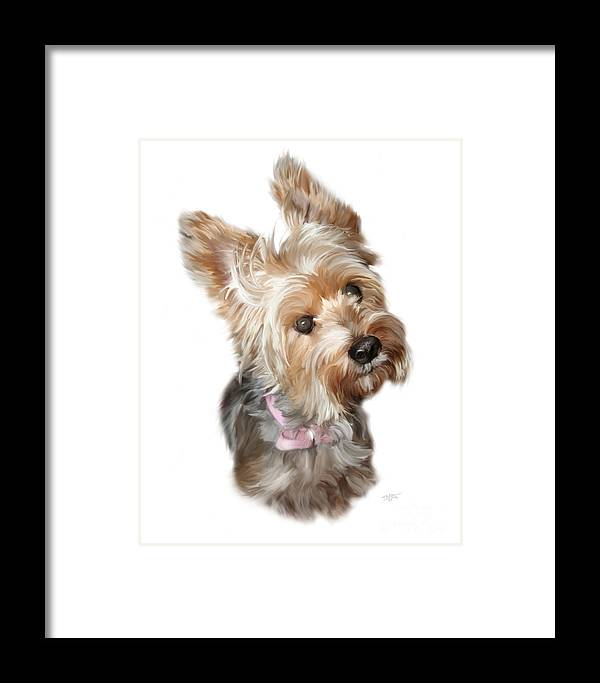 Silky Framed Print featuring the painting Silky Terrier by Paul Tagliamonte