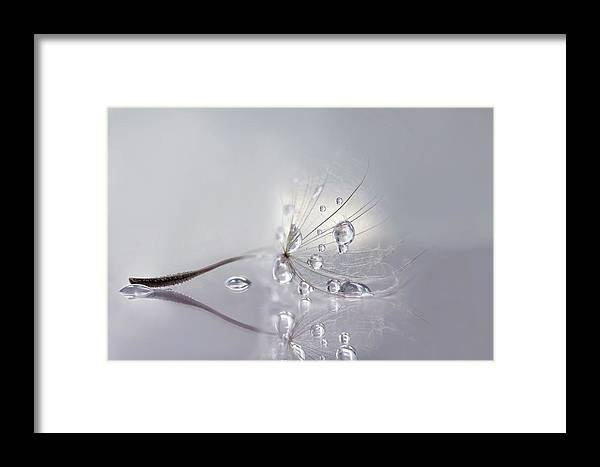 Dandelion Framed Print featuring the photograph Silver by Rina Barbieri