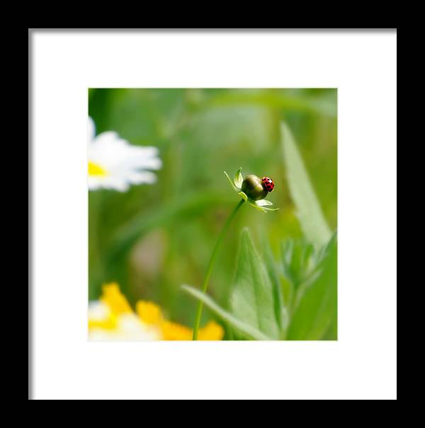 Florals Framed Print featuring the photograph Simply Red by Diana Angstadt