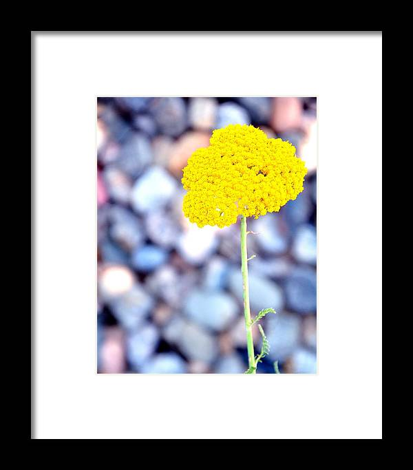 Yellow Framed Print featuring the photograph Single 16139 by Jerry Sodorff