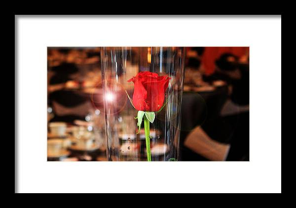 Rose Framed Print featuring the photograph Single Rose by Stephanie Leidolph