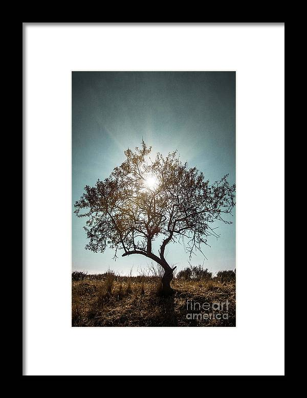 Dark Framed Print featuring the photograph Single Tree by Carlos Caetano