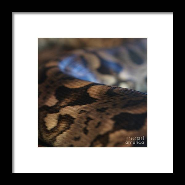 Snake Framed Print featuring the photograph Sinti Hilha - 2 by Linda Shafer
