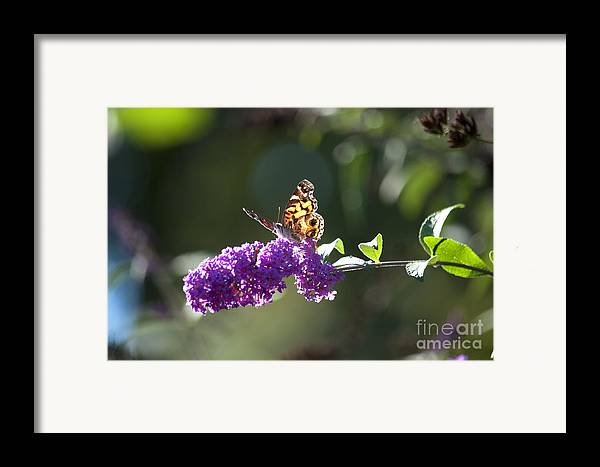 Butterfly Framed Print featuring the photograph Sipping On Syrup by Affini Woodley