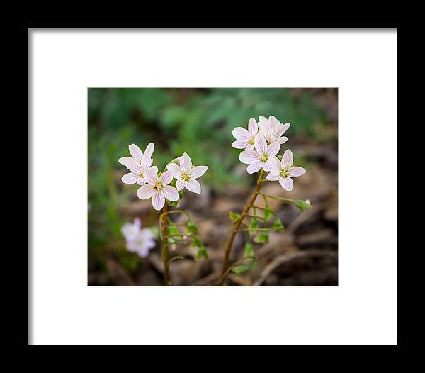 Wildflower Framed Print featuring the photograph Sisterhood by Bill Pevlor