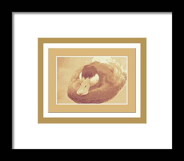 Ducks Framed Print featuring the mixed media Sitting Duck by Tracie Howard