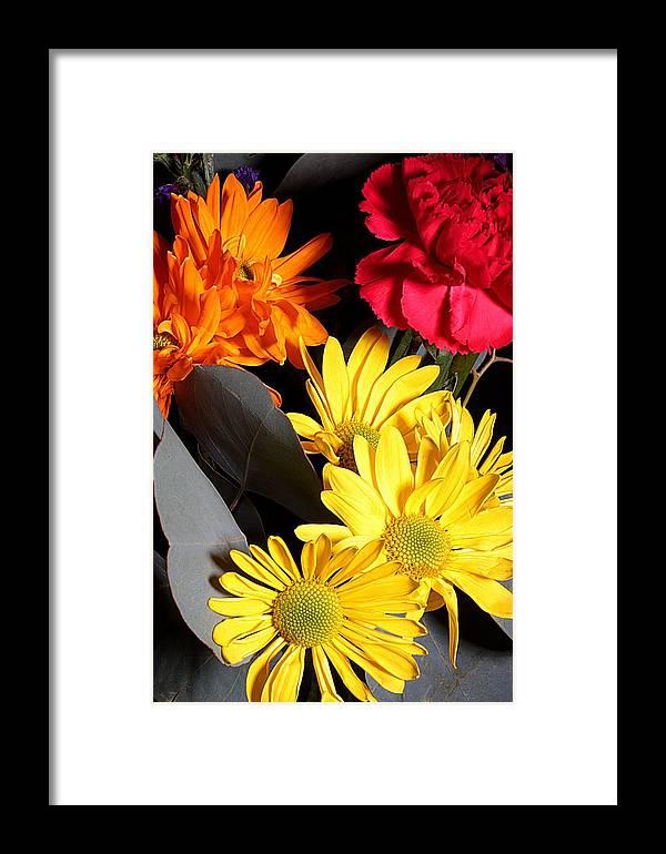 Daisy Framed Print featuring the photograph Six Dasies And A Carnation by Joe Kozlowski