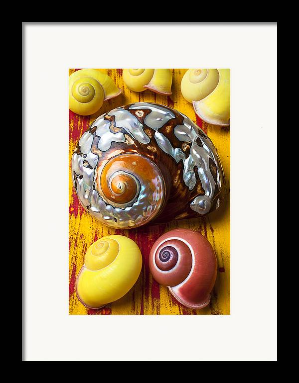 Six Framed Print featuring the photograph Six Snails Shells by Garry Gay