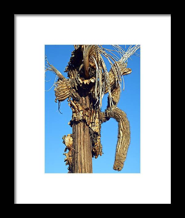 Dead Saguaro Tree Framed Print featuring the photograph Skeleton Of A Saguaro Tree by Selma Glunn