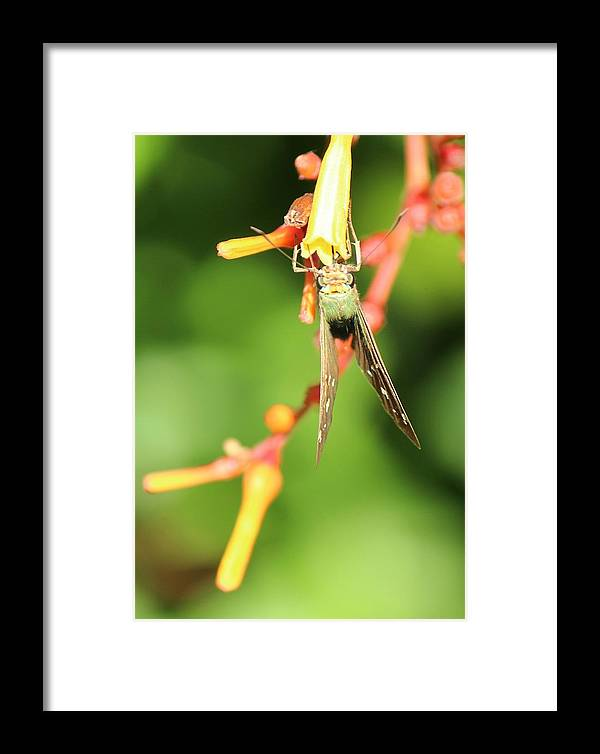 Skipper Framed Print featuring the photograph Skipper Too by Peggy Burley