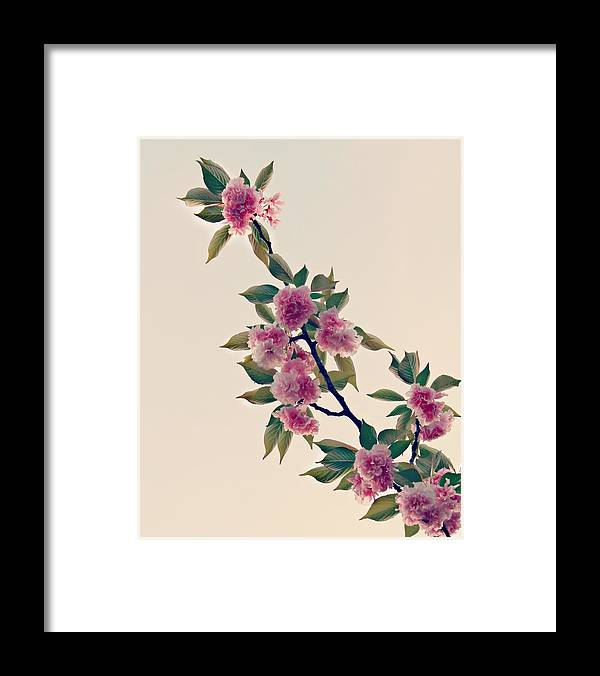 Sky Framed Print featuring the photograph Sky Bloom by Candice Trimble