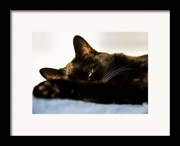 Animal Framed Print featuring the photograph Sleeping With One Eye Open by Bob Orsillo