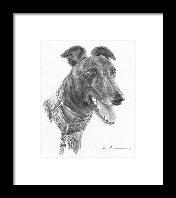 <a Href=http://miketheuer.com Target =_blank>www.miketheuer.com</a> Smiling Greyhound Pencil Portrait Framed Print featuring the drawing Smiling Greyhound Pencil Portrait by Mike Theuer