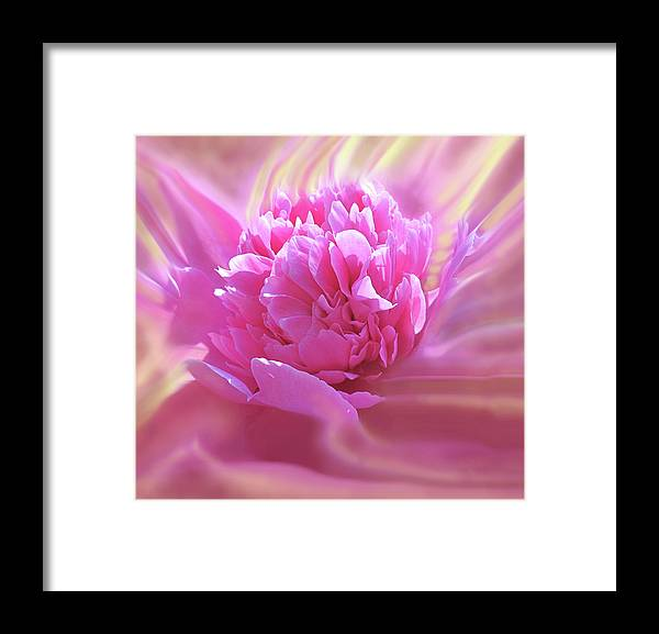 Peony Framed Print featuring the digital art Smooth Pink by Ian MacDonald