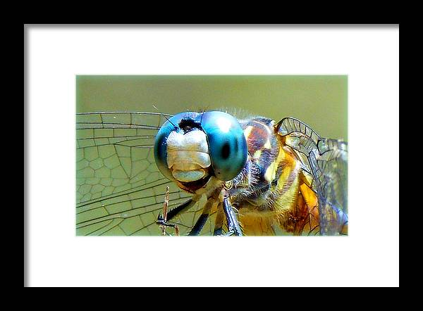 Dragonfly Framed Print featuring the photograph Snack Time Dragonfly by Sheri McLeroy