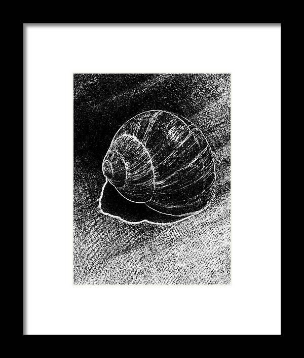 Snail Shells Framed Print featuring the digital art Snail Shell Black And White Art No.11 by Drinka Mercep