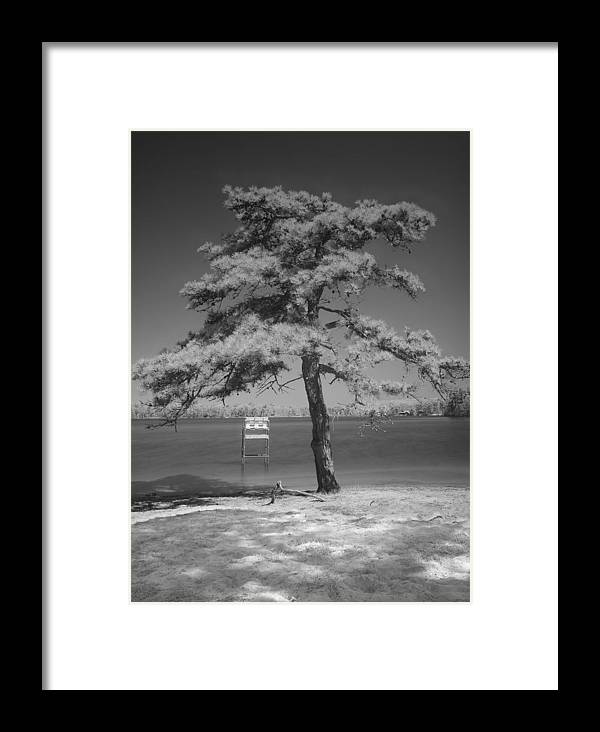Cape Cod Framed Print featuring the photograph Snake Pond Tree by David DeCenzo