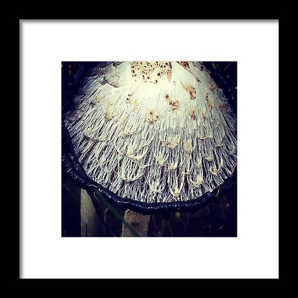 Mushroom Framed Print featuring the photograph Fungus by Illusorium Illustration