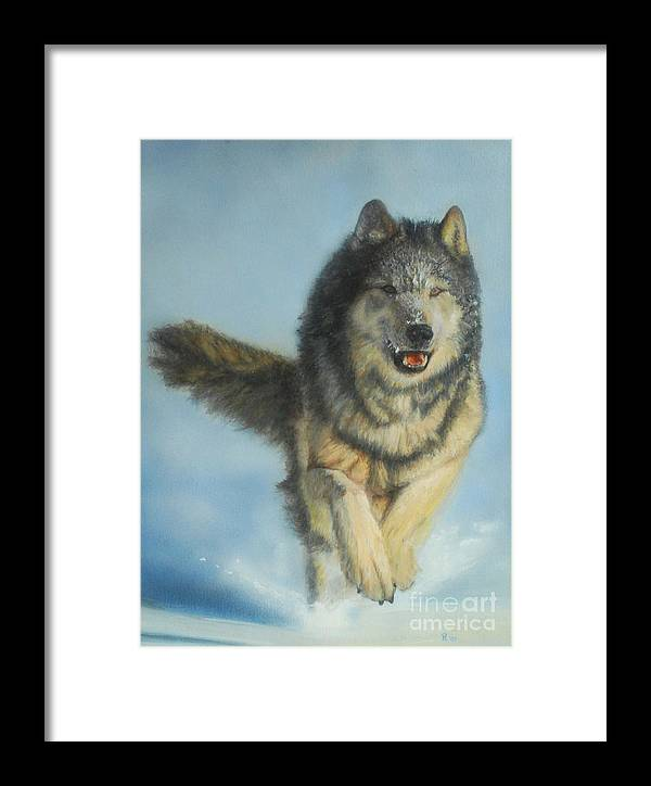 Wolf Framed Print featuring the painting Snodog - Watercolor by GD Rankin
