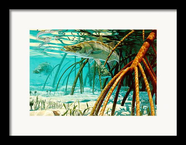 Snook In The Mangroves Framed Print By Don Ray