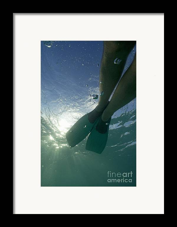 Snorkeling Framed Print featuring the photograph Snorkeller Legs With Flippers Underwater by Sami Sarkis