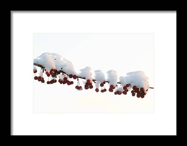 Winter Framed Print featuring the photograph Snow And Berries by Jeanette Oberholtzer