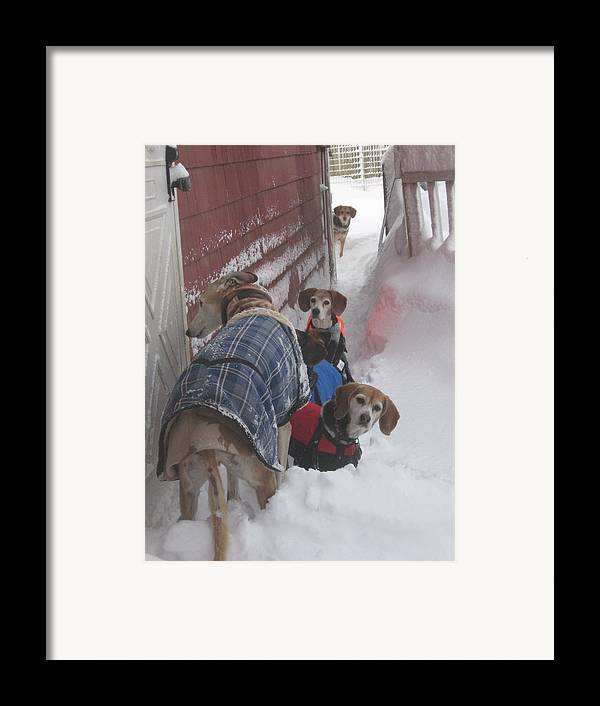 Beagles Framed Print featuring the photograph Snow Angels by Leslie Manley