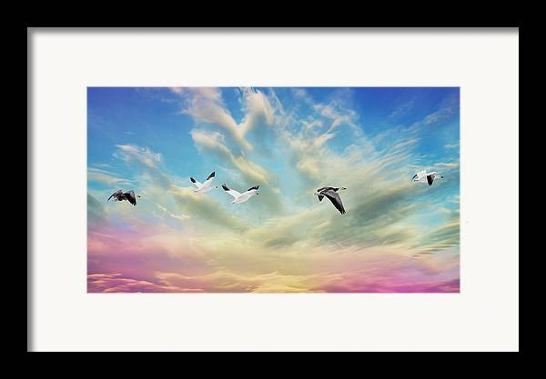 Bird Framed Print featuring the photograph Snow Geese Over New Melle by Bill Tiepelman