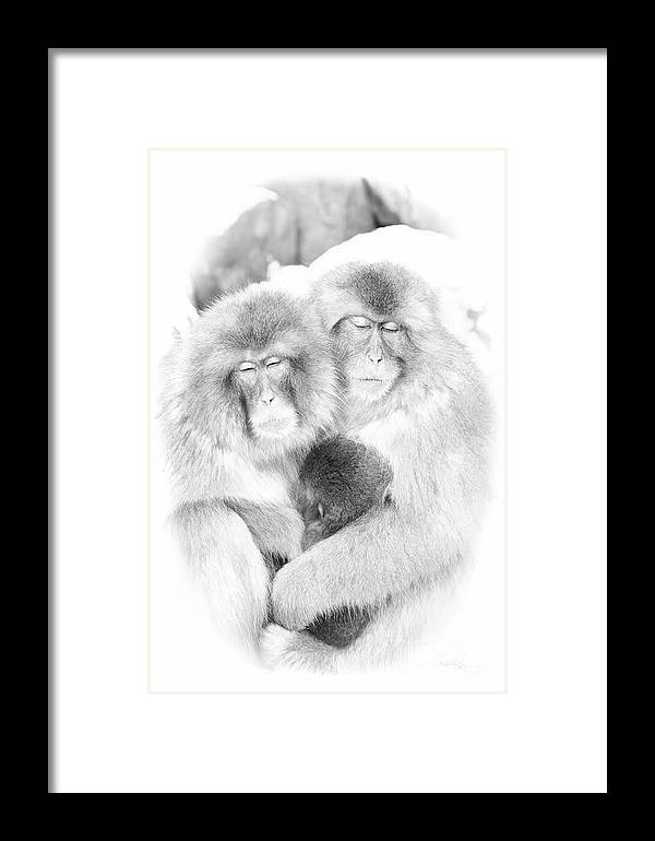Snow Framed Print featuring the digital art Snow Monkey Character Study Vi by Michele Steffey