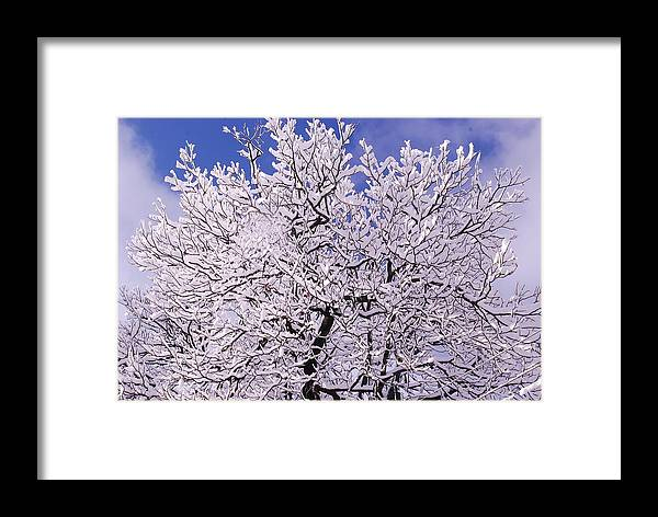 Snow Tree White Bluesky Winter Daylight Mesmerizing Day Beautiful India Framed Print featuring the photograph Snow On Tree by Manmeet Singh