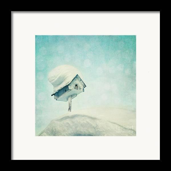 Snowbird Framed Print featuring the photograph Snowbird's Home by Priska Wettstein