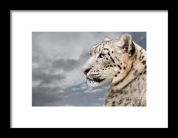 Snow Elopard Framed Print featuring the photograph Snowie by Christine Sponchia