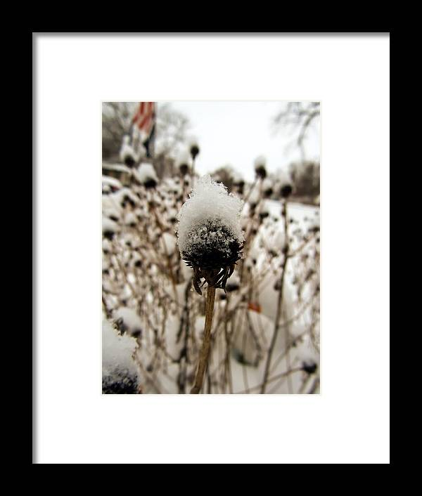 Snowy Cap Framed Print featuring the photograph Snowy Cap by Cynthia Woods