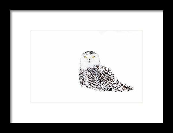 Owl Framed Print featuring the photograph Snowy Owl In Winter Snow by Jim Cumming