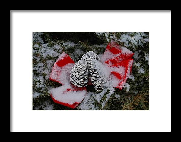 Framed Print featuring the photograph Snowy Pinecones by Eric Armstrong