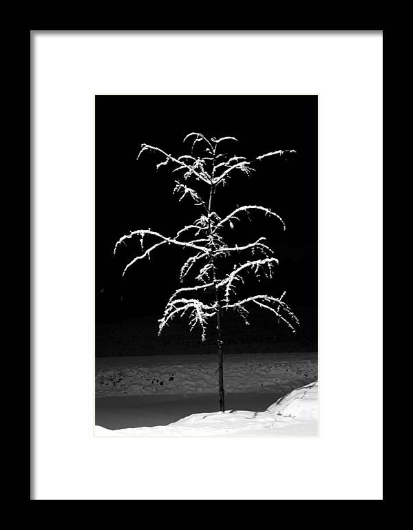 Snow Framed Print featuring the photograph Snowy Sophistication - An Elegant Fledgling by John Stephens